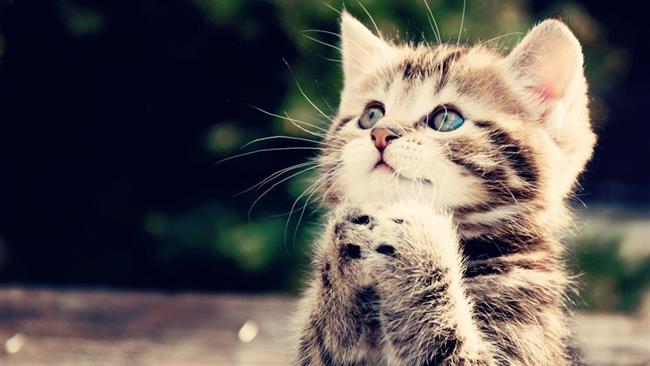 ARN0012004001511289_Hati_Hati_Kucing_Dapat_Memicu_Penurunan_Memory_Pada_Anak